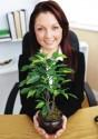 Đặt cây xanh đúng cách trong công sở
